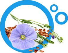 ziarna lnu wraz z kwiatami w niebieskim okrągłym obramowaniu