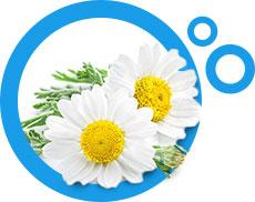kwiaty rumianku w niebieskim okrągłym obramowaniu